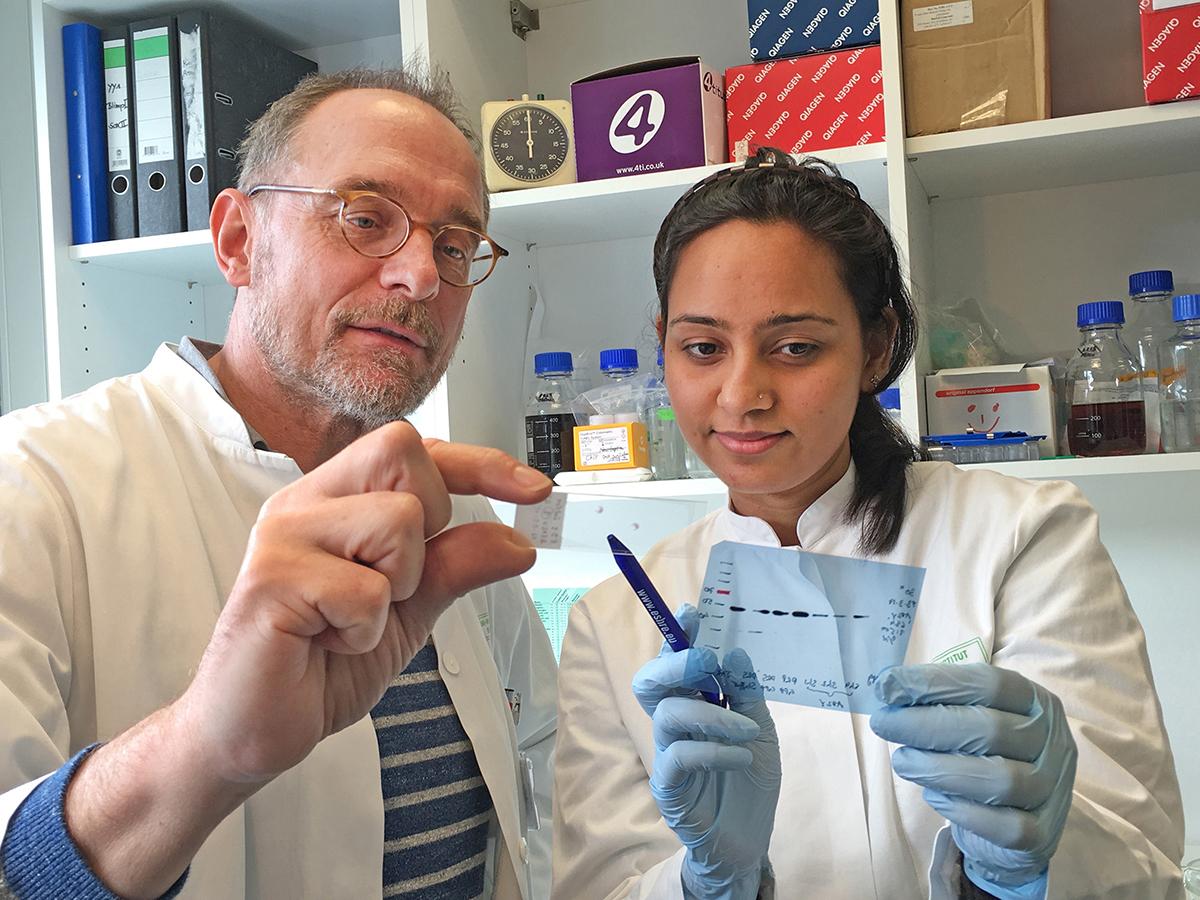 Forscher des UKB finden heraus, wie es im Mutterbauch zur Fehlentwicklung der Plazenta kommt + + + mehr: