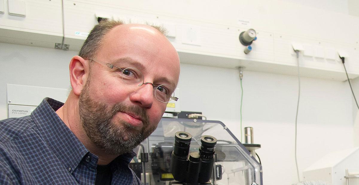 Forscher untersuchen zelluläre Schutzmechanismen